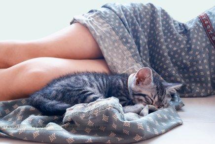 แมวบำบัดซึมเศร้าได้จริงหรือ