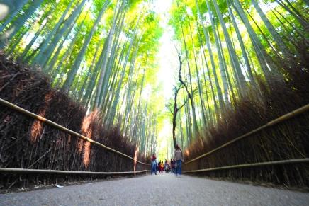 ไป อาราชิยาม่า 2/2  เจอเมนูเด็ด เดินลงรถไฟเดินทะลุป่าไผ่  เข้าวัดเทนริวจิ เรื่อยไปยังริมแม่น้ำโฮซุกาวา (มีคลิป)